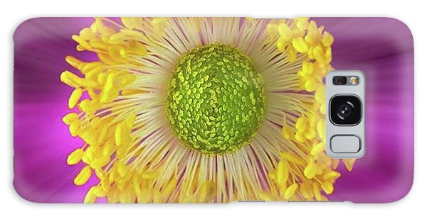 Summer Galaxy Case - Anemone Hupehensis 'hadspen by John Edwards