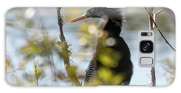 Anhinga 3 March 2018 Galaxy Case