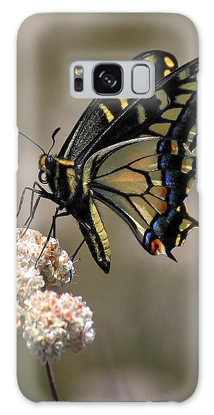 Anise Swallowtail Galaxy Case