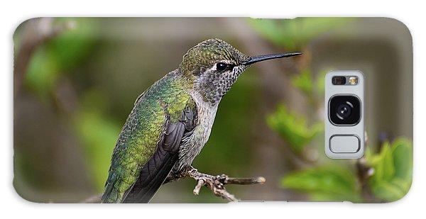 Anna's Hummingbird On Lime Tree Galaxy Case