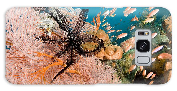 Feather Stars Galaxy Case - Anthias Fish Swim By A Sea Fan by Tim Laman