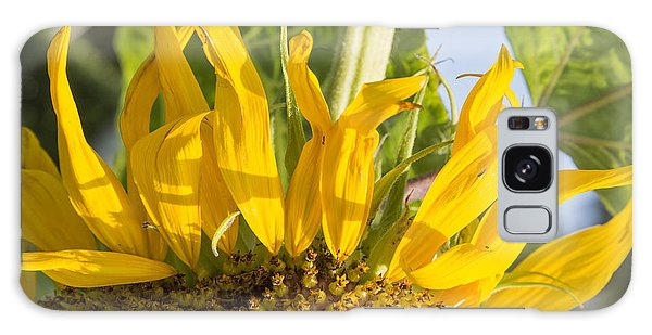 Ants On A Sunflower Galaxy Case