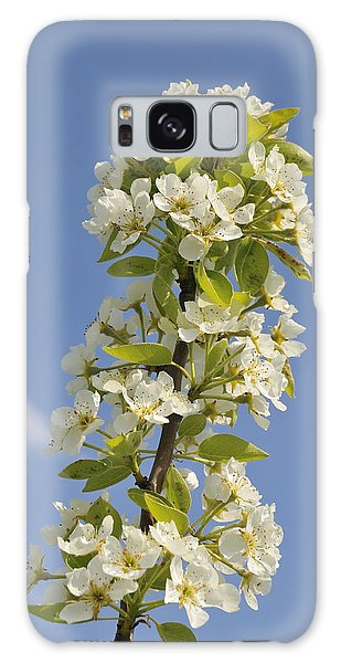 Apple Blossom In Spring Galaxy Case