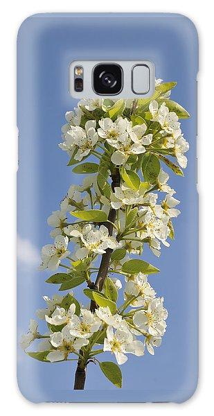 Apple Blossom In Spring Galaxy Case