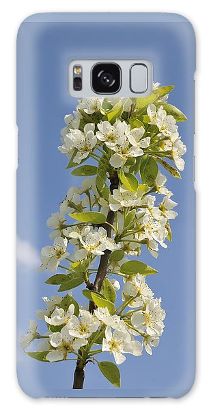 Apple Blossom In Spring Galaxy Case by Matthias Hauser