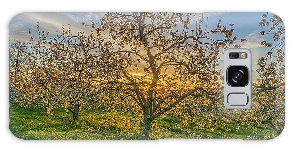 Apple Blossoms At Sunrise 2 Galaxy Case