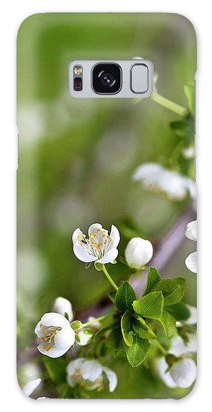 Bud Galaxy Case - Apple Blossoms by Nailia Schwarz