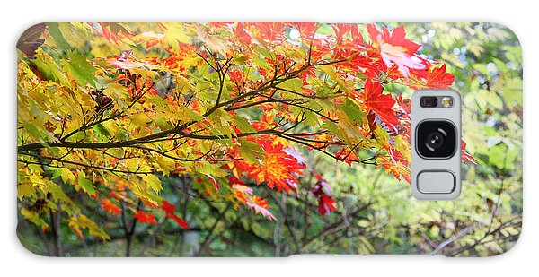 Arboretum Autumn Leaves Galaxy Case