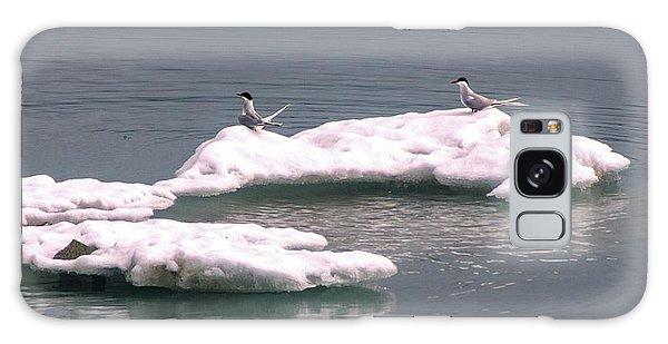 Arctic Terns On A Bergy Bit Galaxy Case