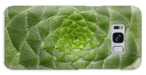 Artistic Nature Green Aeonium Cactus Macro Photo 203 Galaxy Case