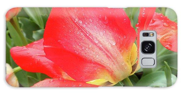 Sun Lights Tulips After Spring Rain Galaxy Case
