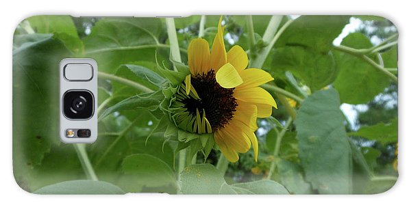 Sunflower Rising Galaxy Case