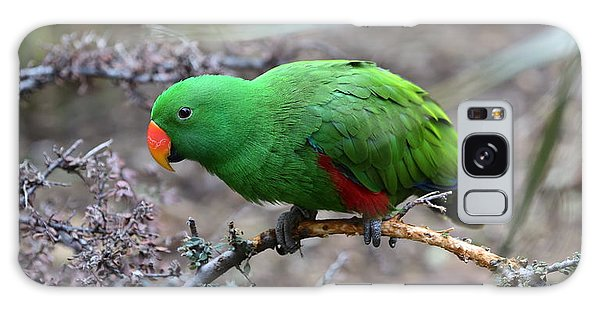 Green Male Eclectus Parrot Galaxy Case