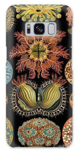 Scientific Illustration Galaxy Case - Ascidiae by Ernst Haeckel