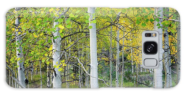 Aspens In Autumn 6 - Santa Fe National Forest New Mexico Galaxy Case