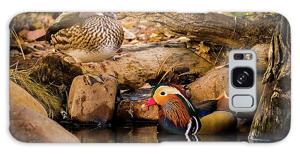 At The Waters Edge - Mandarin Ducks Galaxy Case
