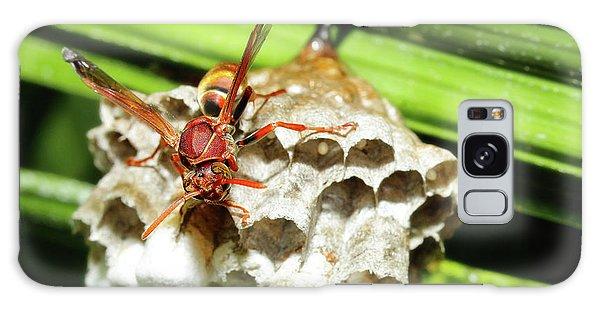 Australian Papper Wasp 772 Galaxy Case