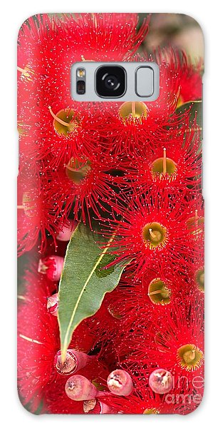 Australian Red Eucalyptus Flowers Galaxy Case by Joy Watson