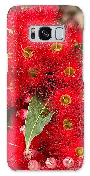 Australian Red Eucalyptus Flowers Galaxy Case