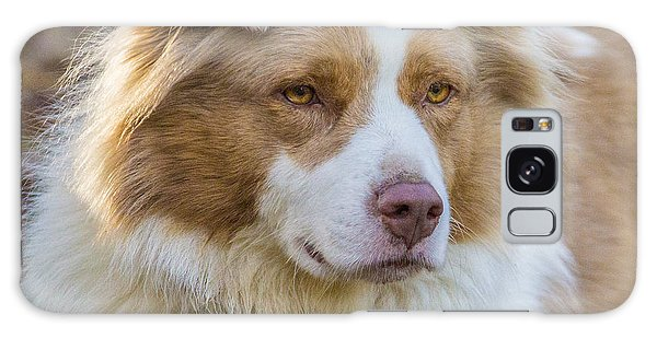 Australian Shepherd Dog Galaxy Case