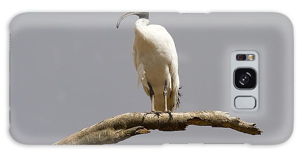 Ibis Galaxy Case - Australian White Ibis Perched by Mike  Dawson