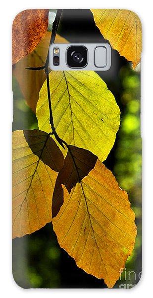 Autumn Beech Tree Leaves Galaxy Case