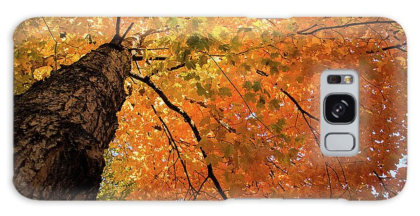 Autumn Canopy In Maine Galaxy Case