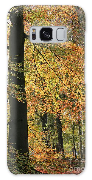Autumn Colored Trees In Forest Galaxy Case