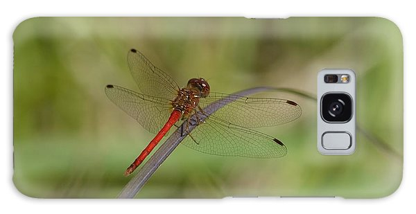 Autumn Meadowhawk Galaxy Case by Randy Bodkins