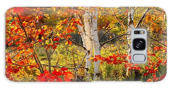 Autumn Scene With Red Leaves And White Birch Trees, Nova Scotia Galaxy Case