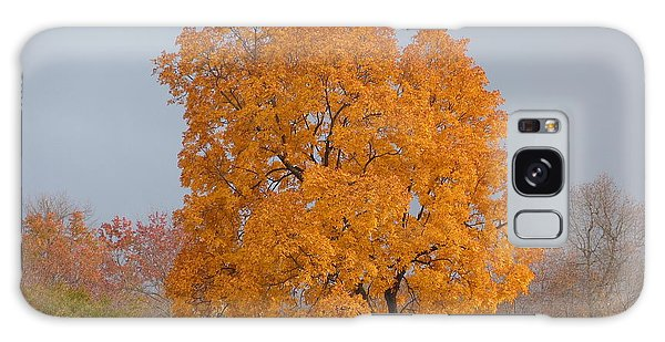 Autumn Tree Galaxy Case by Donald C Morgan