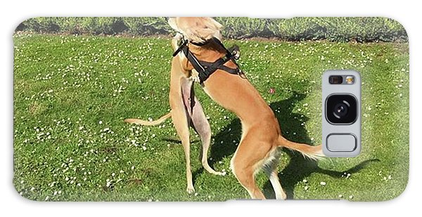 Galaxy Case - Ava The Saluki And Finly The Lurcher by John Edwards