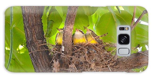 Baby Birds Waiting For Mom Galaxy Case