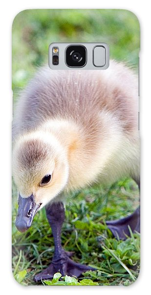 Gosling Galaxy Case - Baby Canada Goose by Randall Ingalls