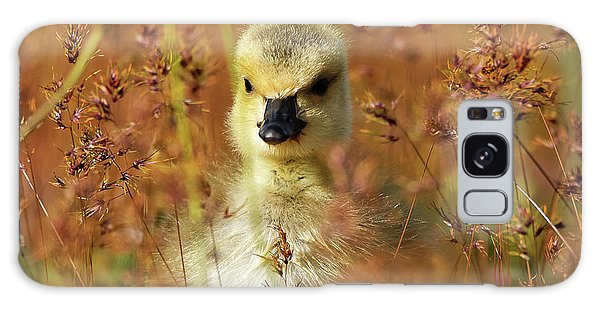 Baby Cuteness - Young Canada Goose Galaxy Case