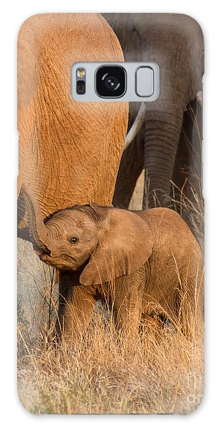 Baby Elephant 2 Galaxy Case by Chris Scroggins