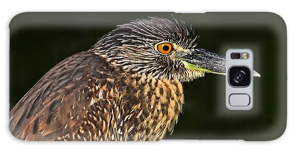 Baby Face - Yellow-crowned Night Heron  Galaxy Case by HH Photography of Florida