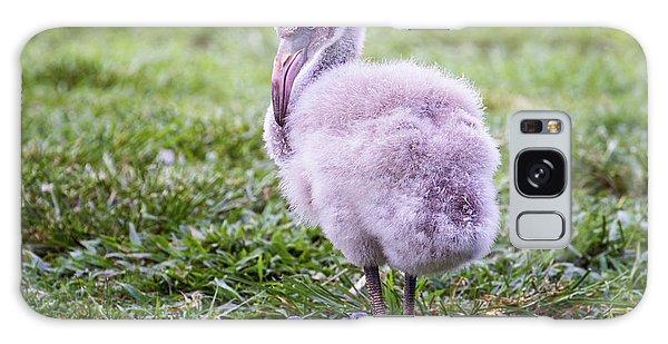 Baby Flamingo Sitting Galaxy Case