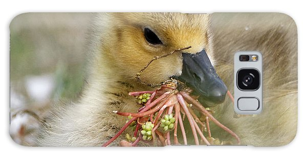 Baby Gosling Collecting Flowers Galaxy Case