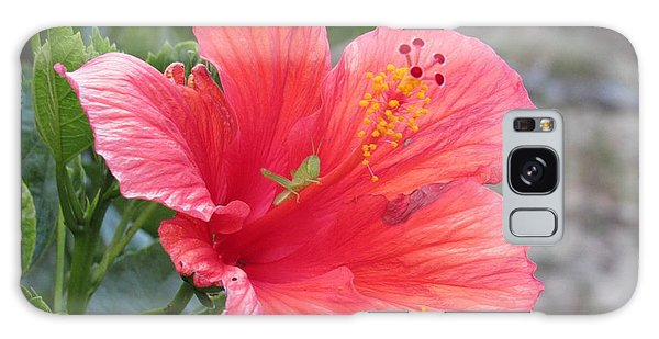 Galaxy Case featuring the photograph Baby Grasshopper On Hibiscus Flower by Nancy Nale