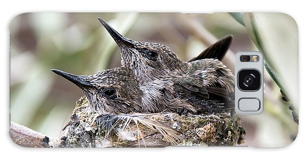 Baby Hummingbirds Outgrowing Their Nest Galaxy Case