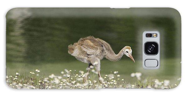 Baby Sandhill Crane Walking Through Wildflowers Galaxy Case