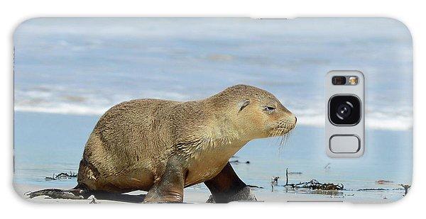 Baby Sea Lion On Seals Bay Galaxy Case