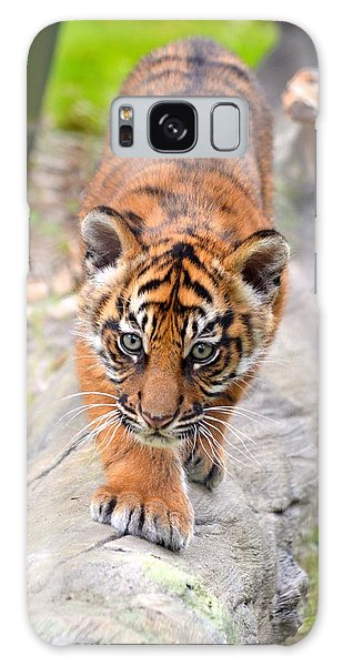 Baby Sumatran Tiger Cub Galaxy Case by Richard Bryce and Family