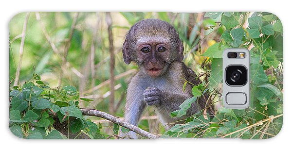 Baby Vervet Monkey Galaxy Case