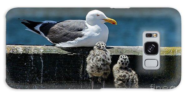 Baby Western Gulls With Mom Galaxy Case