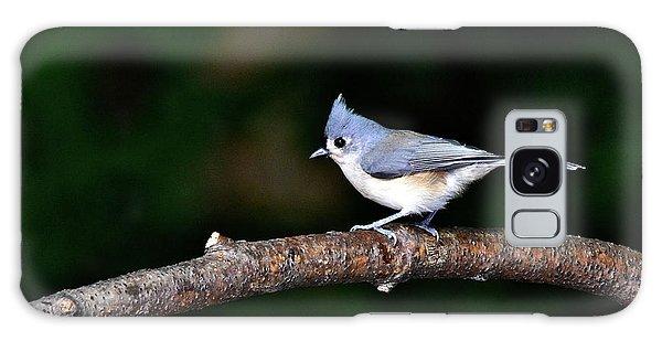 Back Yard Bird Galaxy Case
