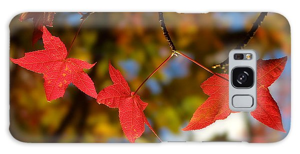 Galaxy Case - Backlit Glowing Red Maple Leaves by Iordanis Pallikaras