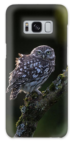 Backlit Little Owl Galaxy Case
