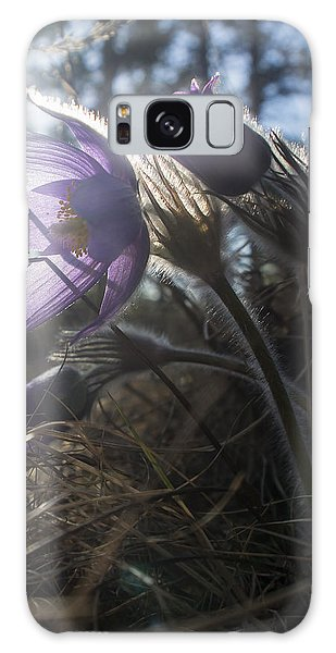 Backlit Pasque Flowers Galaxy Case